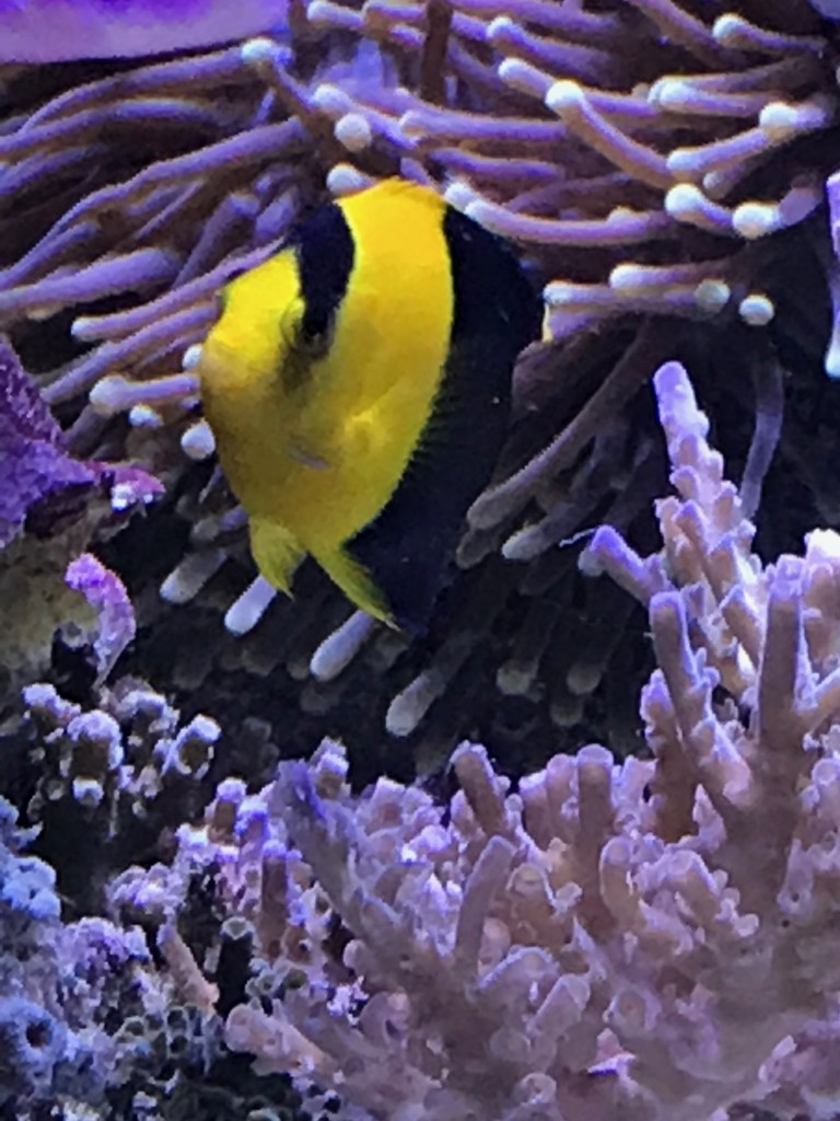 ultimate reef tank of the month may 2018